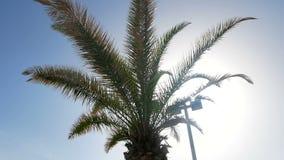 Sommer des blauen Himmels der Palme stock video