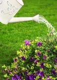 Sommer in einem Garten lizenzfreie stockbilder