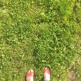 Sommer entspannen sich auf dem frischen Gras stockbilder
