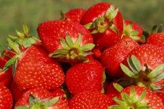 Sommer-Erdbeeren Stockfotos