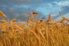 Sommer-Feld Lizenzfreies Stockfoto