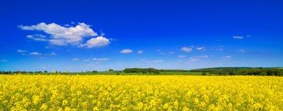 Sommer-Feld Stockfoto