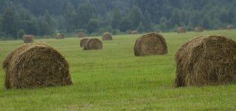 Sommer-Feld mit Stapel Heu Stockfotografie