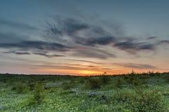 Sommer-Feld-Sonnenaufgang über Wiese Stockbild