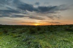 Sommer-Feld-Sonnenaufgang über Wiese Stockfotografie