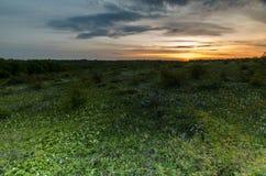 Sommer-Feld-Sonnenaufgang über Wiese Lizenzfreies Stockfoto