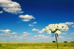 Sommer-Feld und Blume Lizenzfreie Stockbilder