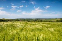 Sommer-Felder in Cornwall Stockbilder