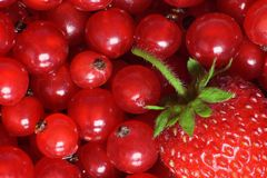 Sommer-Früchte Lizenzfreie Stockbilder
