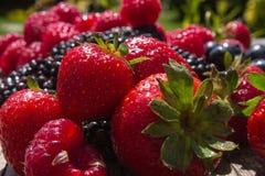 Sommer-Früchte Lizenzfreies Stockbild