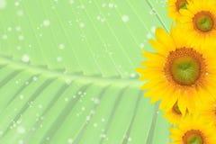 Sommer, Gänseblümchen, gelber Blumen-Hintergrund Lizenzfreie Stockfotografie