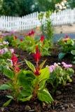 Sommer-Garten Stockfoto