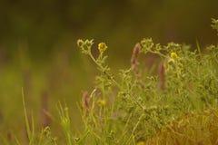 Sommer-Gräser Stockbild