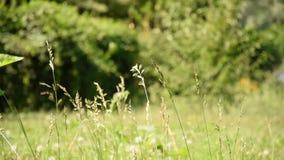 Sommer Helle Winde, die Gras in einer Waldlichtung beeinflussen stock video