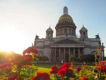 Sommer-Herbst in St Petersburg Blühende Rosen in den Abendstrahlen der Sonne durch ` s St. Isaac Kathedrale Stockfotos