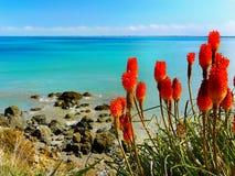 Sommer-Hintergrund-blaue Seeblumen Stockfoto