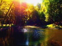 Sommer im Wald Stockfotos