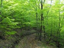 Sommer im Wald Lizenzfreie Stockfotos