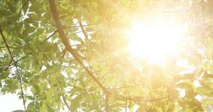 Sommer im Wald, abstrakte natürliche Hintergründe mit frischem Laub und Sonne, die auf Hintergrund scheint stock footage