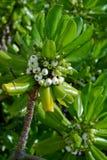 Sommer-Küstenpflanze II Lizenzfreie Stockbilder