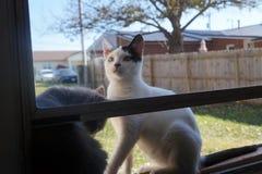 Sommer Kitty Duo Lizenzfreie Stockfotos