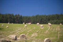 Sommer Landschaft Lizenzfreies Stockfoto