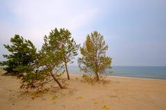 Sommer-Landschaft, der Baikalsee Stockfotos