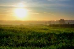 Sommer-Landschaft mit Feld Lizenzfreie Stockfotografie