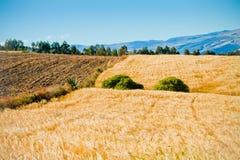 Sommer-Landschaft mit Getreide Feld und Wolken Lizenzfreie Stockfotos