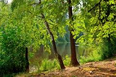 Sommer-Landschaft mit See in Martyshkino Lizenzfreies Stockbild