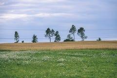 Sommer-Landschaft mit Weizen-Feld und elektrischen Pfosten mit Drähten Stockfoto