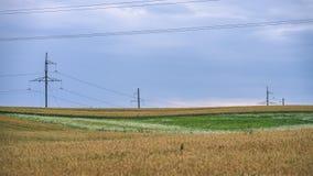Sommer-Landschaft mit Weizen-Feld und elektrischen Pfosten mit Drähten Lizenzfreies Stockbild