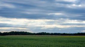 Sommer-Landschaft mit Weizen-Feld und elektrischen Pfosten mit Drähten Lizenzfreies Stockfoto