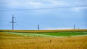 Sommer-Landschaft mit Weizen-Feld und elektrischen Pfosten mit Drähten Stockbilder