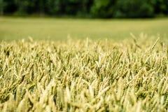 Sommer-Landschaft mit Weizen-Feld und Wolken Lizenzfreies Stockfoto