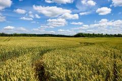 Sommer-Landschaft mit Weizen-Feld und Wolken Stockbilder