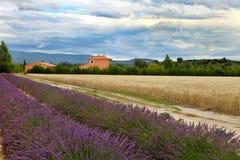 Sommer-Landschaft mit Weizen- und Lavendelfeld in Provence Stockfoto