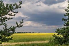 Sommer-Landschaft mit Weizenfeld am sonnigen Tag mit blauem Himmel und irgendwelchen weißen Wolken Stockfoto