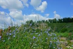 Sommer, Landschaft, Natur, See, Wald und Feld Lizenzfreies Stockfoto