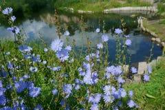Sommer, Landschaft, Natur, See, Wald und Feld Stockfotografie