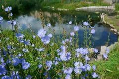 Sommer, Landschaft, Natur, See, Wald und Feld Lizenzfreie Stockfotos