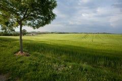 Sommer-Landschaft in Südfrankreich Lizenzfreie Stockfotos