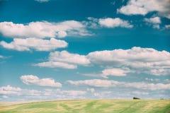 Sommer-Landschafts-ländliche Feld-Wiesen-Landschaft unter szenischem drastischem Himmel Stockfotos
