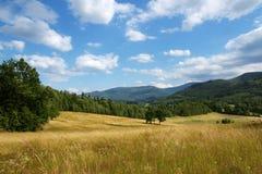 Sommer landsscape lizenzfreies stockbild