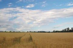 Sommer landwirtschaftliches lanscape stockbild