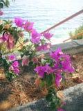 Sommer Licht und buganvilia durch Weg und Treppe zum Meer Stockbilder