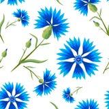Sommer-nahtloses Muster mit blauen Kornblumen Stockbilder
