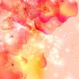 Sommer- oder Frühlingsblumen Stockfoto