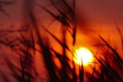 Sommer-Sonnenuntergang auf dem Gebiet von Ukraine Stockfotografie