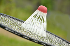 Sommer sport. Badminton racket and bird in garden Stock Photos